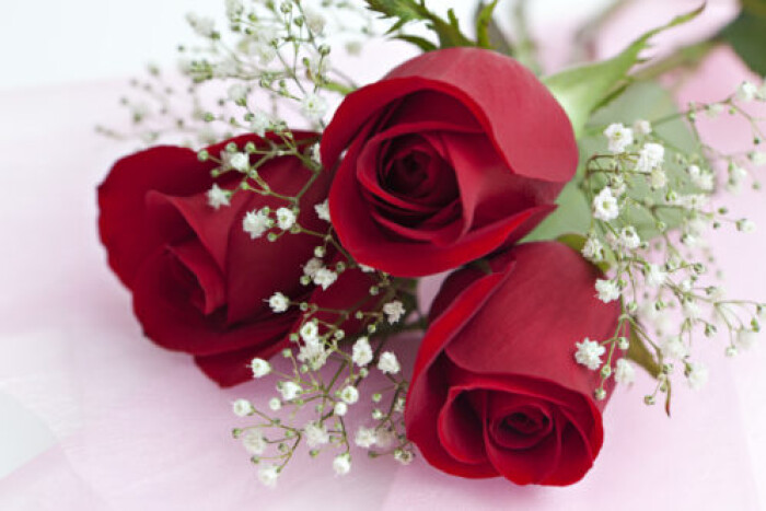 A close up on three red roses with baby breath's flowers too on a pink background